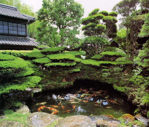 Koi pond japanese gardening style pinterest for Japanese garden with koi pond