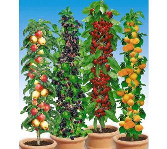 17 Best Images About Balkon, Blumen, Pflanzen, Garten On Pinterest ... Balkonblumen Pflanzen Kalten Jahreszeit