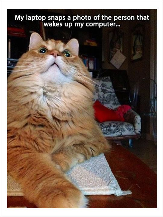 10 Fresh Cat Memes Today 1 Cats Who Regretted Their Life