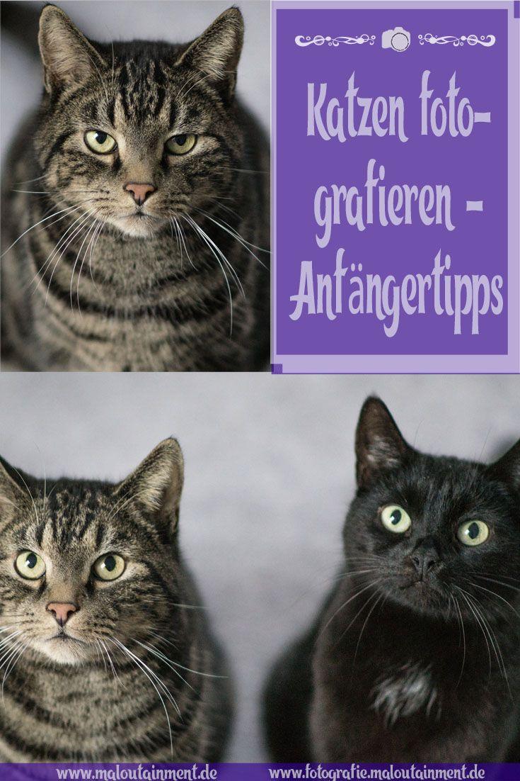 Hitzschlag Bei Der Katze Erkennen Und Behandeln Mit Bildern