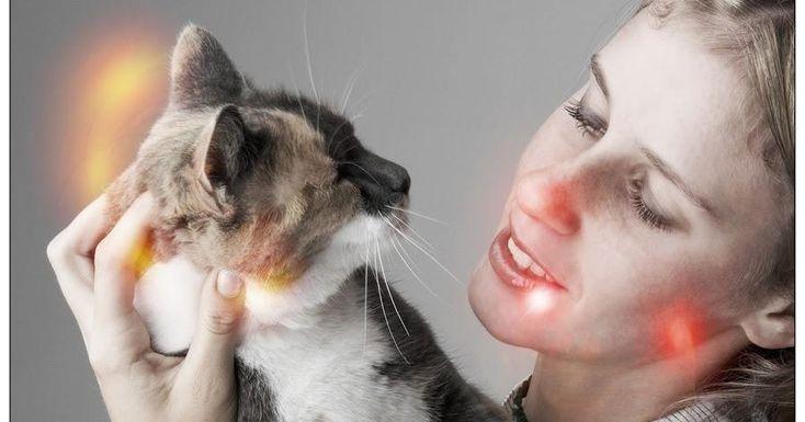 ¡Las personas que tenemos gatos viviremos más!