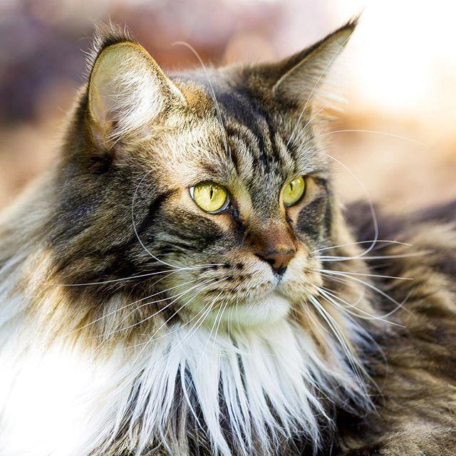 chat pour celibataire que recherche un homme chez une femme plus agee