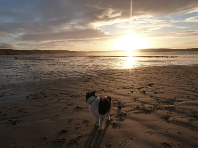 One of my collies on Dunnet beach in Caithness, Highland Scotland