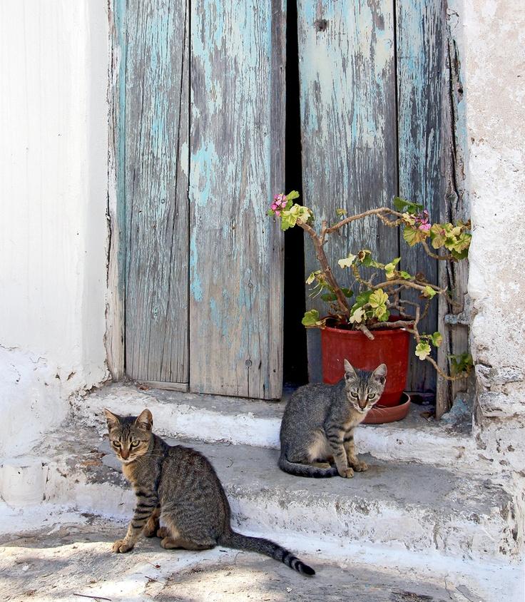 Cats posing for my photo in paros