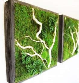 Artisan Moss   Plant Paintings; Preserved Living Wall for your Home & Office