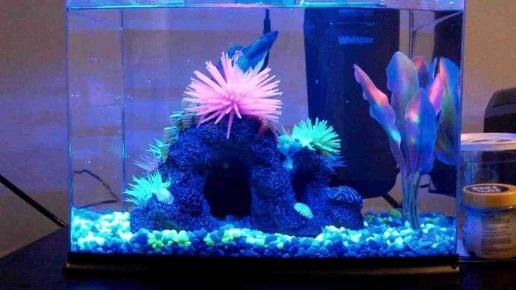 260 best fish aquariums images on pinterest fish for Petco fish tank decor