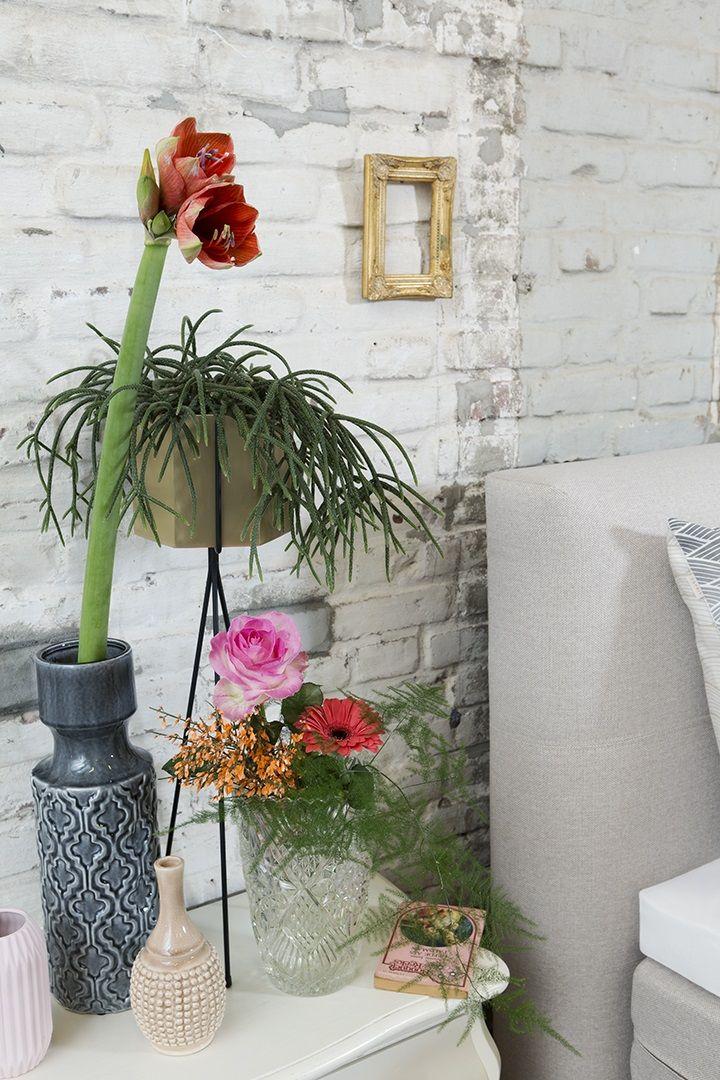 17 beste idee n over het planten van bloemen op pinterest muggenplanten bloem tuinieren en - Creeren van een tuin allee ...