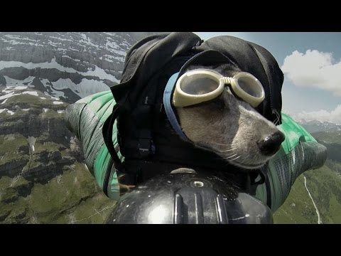 dogmessnger.com What Was The Last Instagram Post For His Dog Before He Died? (Video) - Page 2 of 3 - The Dog Messenger | The Dog Messenger