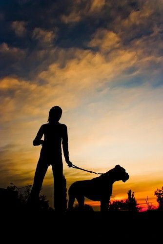 Five safety tips for dog-walking at night