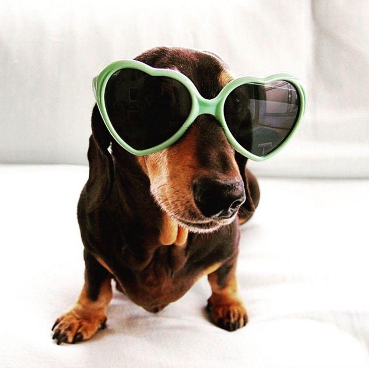 #tigerstores #tigersummer #minitigers #sunglasses