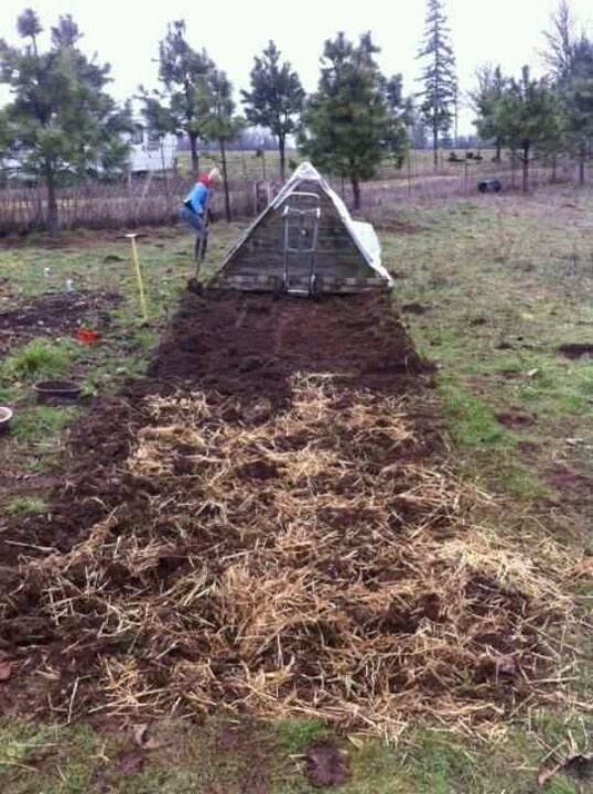 Moving the pig pen and tolling the soil for planting a garden.