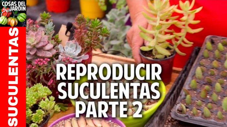 Cómo reproducir suculentas - Secretos del Experto - Parte 2