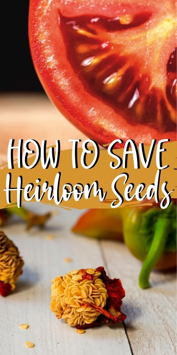 How To Save Heirloom Seeds For Next Year S Garden In 2020 Seed Saving Heirloom Seeds Seeds