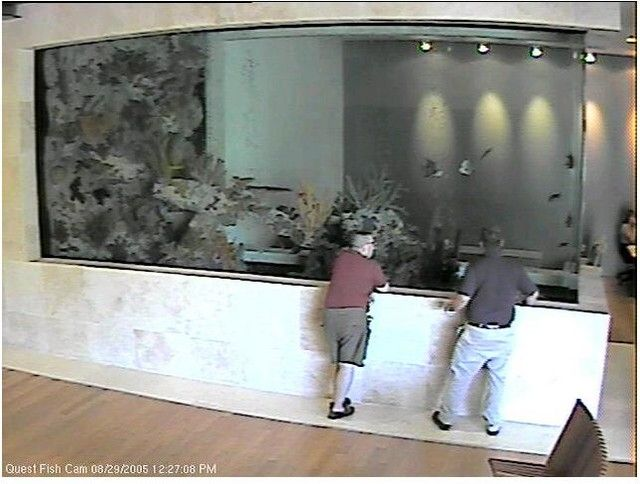 6000 gallons fish only fishtank pinterest office for Office fish tank