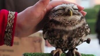 A me piacciono molto gli animali sopratutto.1E Alberghiero - Presentazione PERSONALE - Community - Google+