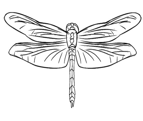 Simple dragonfly coloring pages for Dragonfly coloring pages