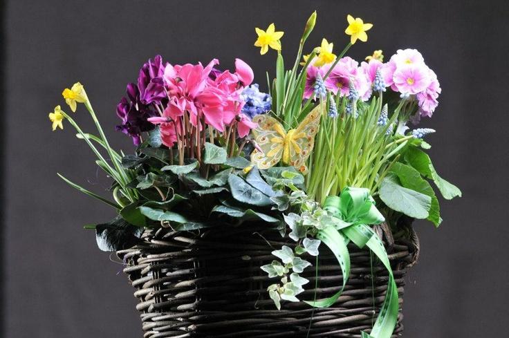 Cadou Martisor 8    Aranjament flori de primavara in cos de nuiele 35-  40 cm    Pret: 110 lei + TVA    Detalii pe www.corporatebaskets.ro