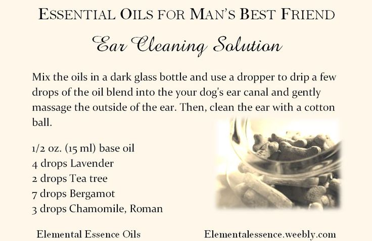 Is It Bad To Use Dog Ear Cleaner On Cats