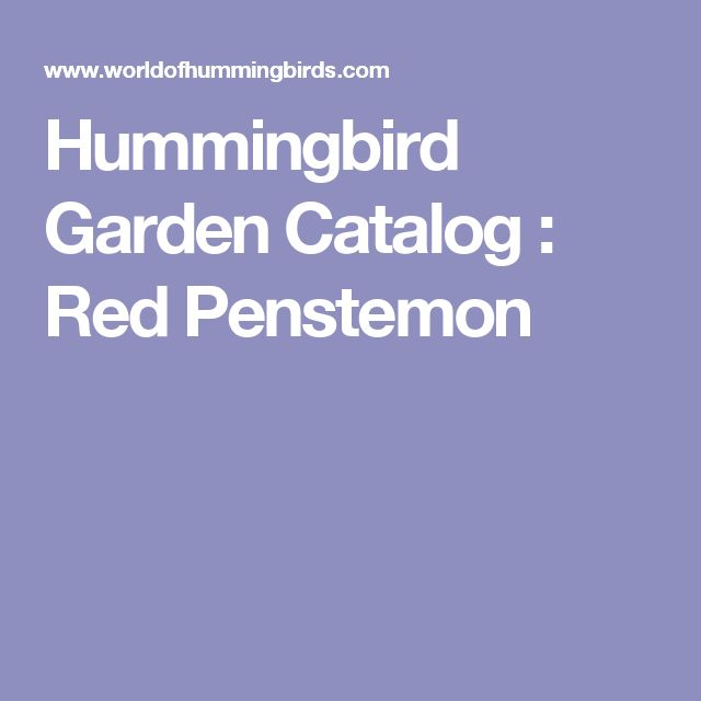 Hummingbird Garden Catalog : Red Penstemon