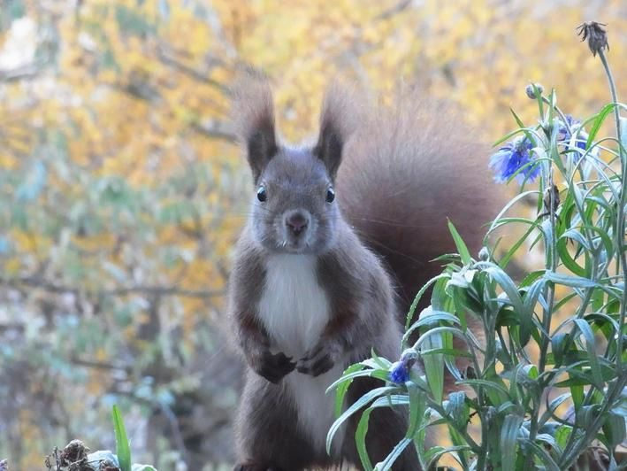 Der Blick in die Kamera. Katharina Hausel schickte uns diese Bilder von Eichhörnchen in Kreuzberg, nahe der Heilig-Kreuz-Kirche.