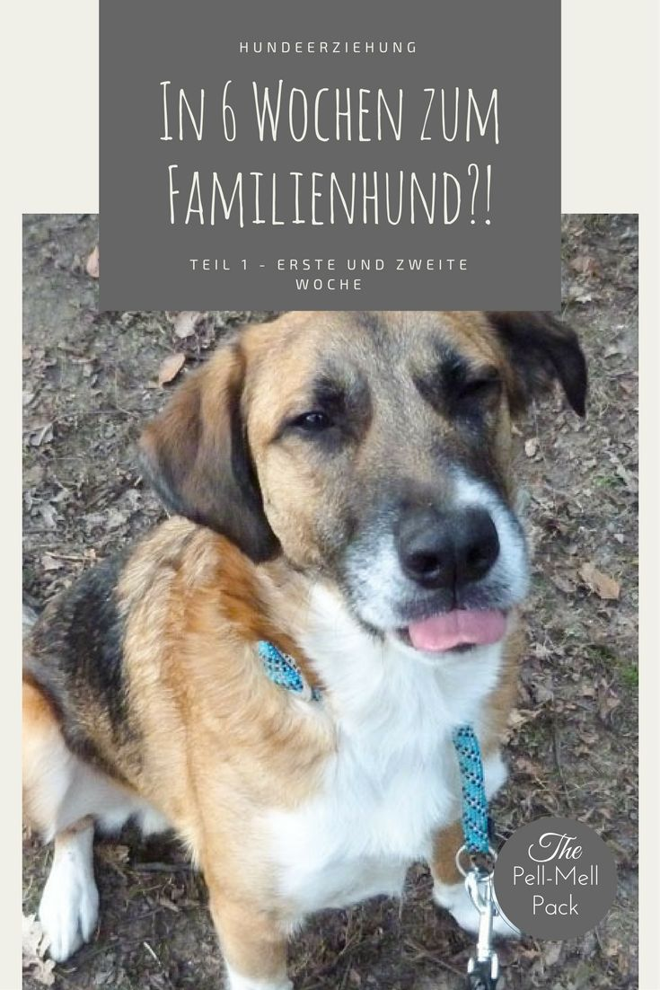 Nice In Wochen zum Familienhund u Teil