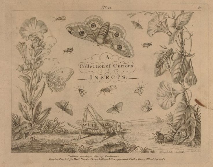 Title-page of the drawing book 'A Collection of Curious Insects'; decorated with butterflies, moths, flowers, beetles, a caterpillar, cricket, and ladybird; the insects framing the title in the centre; after Rösel; a plate in a stitched booklet of eight s