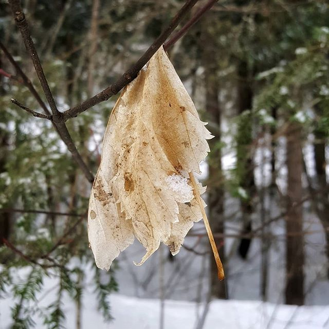 When yet another snowfall leaves you feeling a bit wrung out...LOL.  .  Take heart it's not going to last forever. I've heard rumors of sunshine today.  .  .  .  .  .