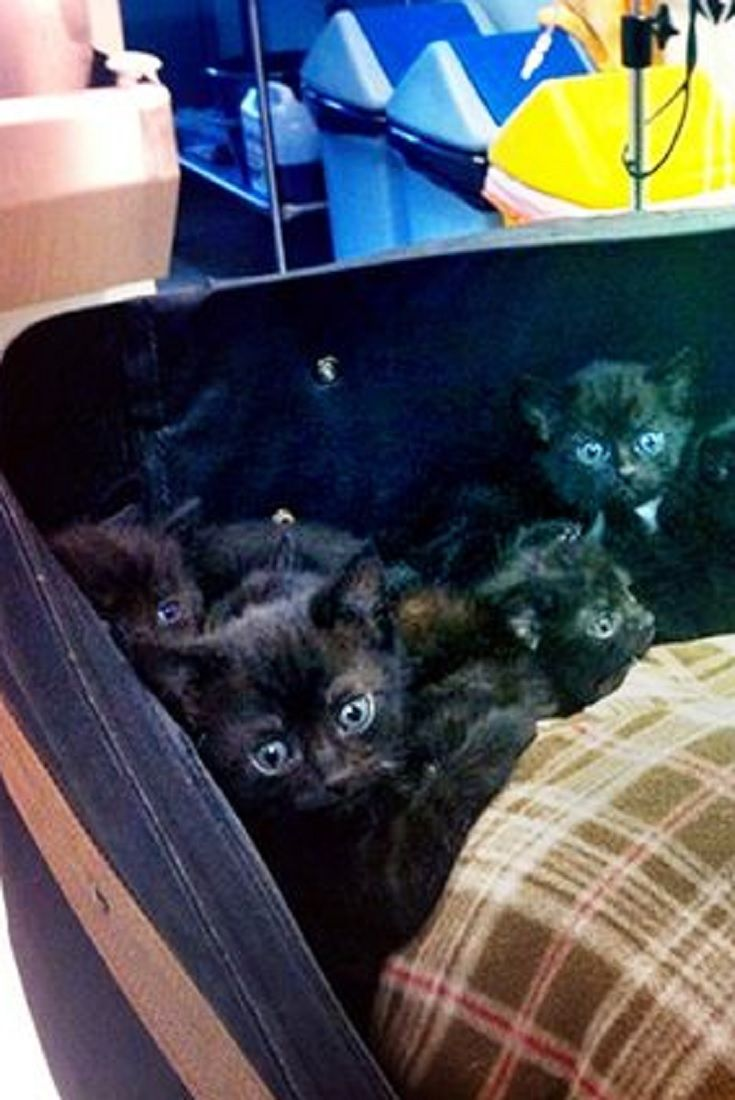 Woman Finds 15 Crying Kittens Stuffed In Suitcase On Her Doorstep Kittens Cats And Kittens Cute Animals