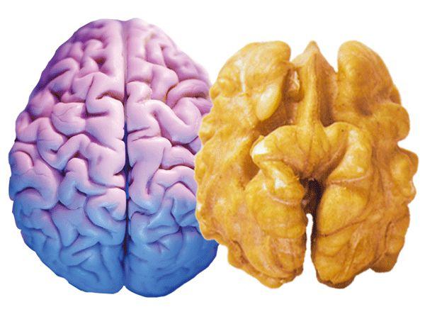 Как почистить сосуды головного мозга от холестерина - perchinka63.ru