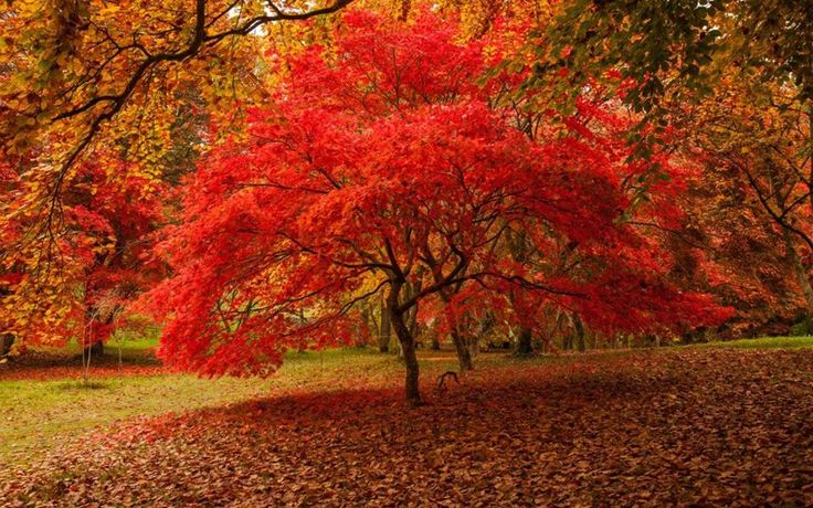 Trees in Autumn in 2020 Fall landscape photography, Fall