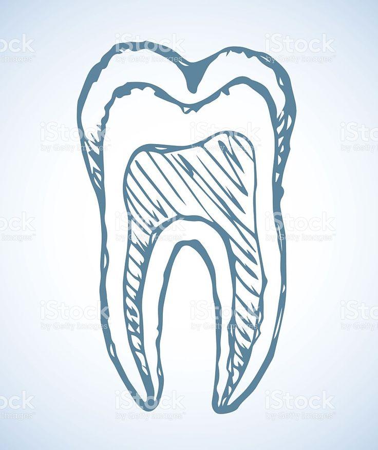 Зуб. Вектор рисование Сток Вектор Стоковая фотография