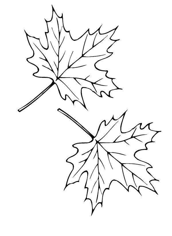 Листья клена трафарет картинки