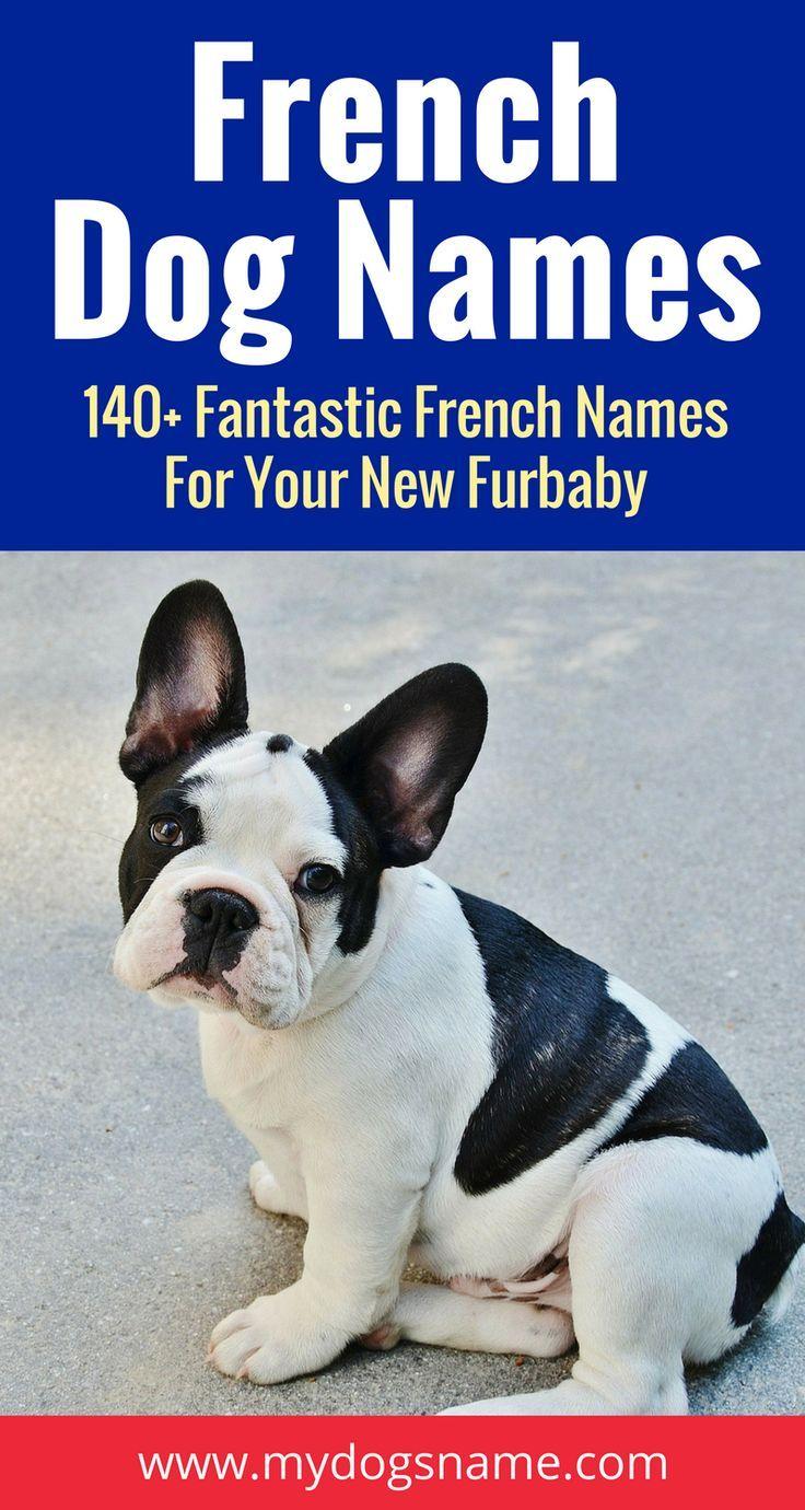 Beautiful French Dog Names 211 Fantastic Name Ideas French Dog Names French Dogs French Bulldog Breeders