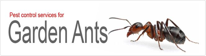 Garden Ant Killers London  We have emerged as a reputed name in controlling various kind of pest infestation. We use organic and friendly method to control the pest problem with our garden ant control team based in London; we help you ensure that you live in an ant free environment.