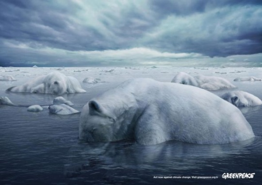 Greenpeace: Polar Bears