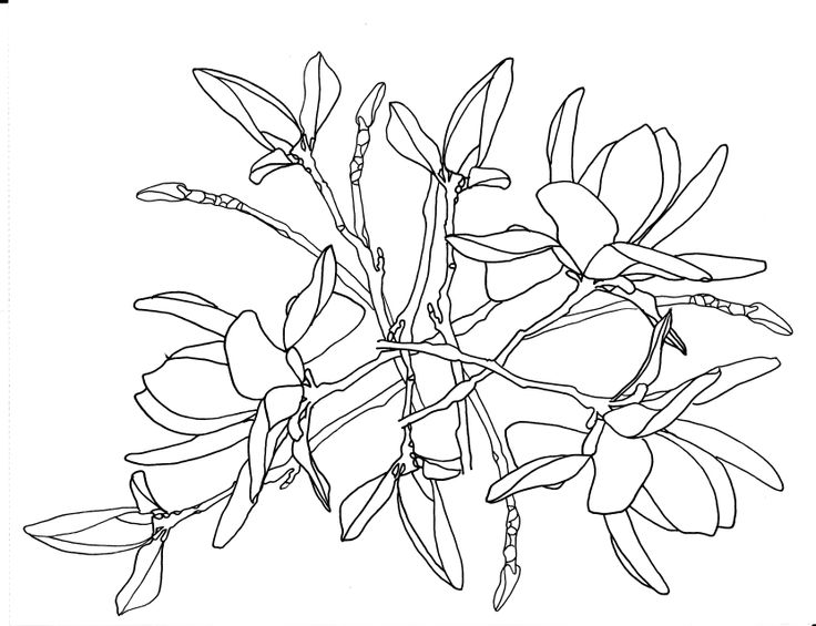 Flower In Line Drawing : Line drawing flowers tulip tree blooms drawings