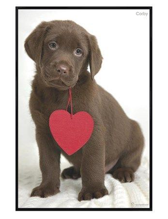 57 Best Pets And Valentines Day Images On Pinterest | Doggies, Puppy Love  And Adorable Animals