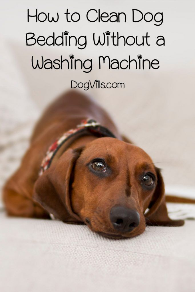 How To Clean A Dog Bed Without A Washing Machine Dog Has Diarrhea Dog Upset Stomach Stomach Remedies