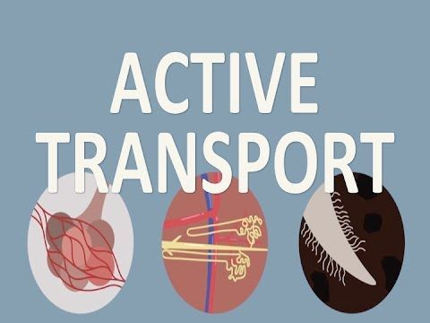 Transport In Cells Active Transport Biology For All