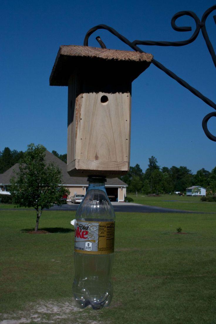 Carpenter Bee Trap Rid Yourself Of Damaging Carpenter Bees