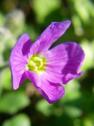 Tiny Purple Flower