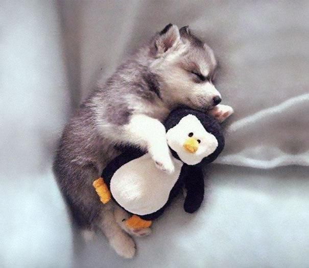 Doggy and penguin