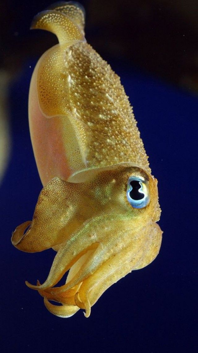 Cuttlefish. These AH-Mazing creatures & hands down masters of camouflage are my new obsession.