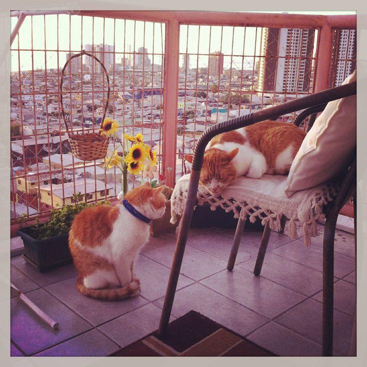 Mientras tanto ellos disfrutan al aire libre en el balcón, durante el atardecer. Alexa y Donatello.