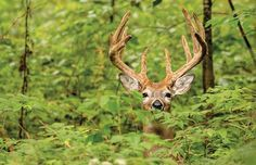 How to Turn Your Property Into a Buck Paradise | Field & Stream