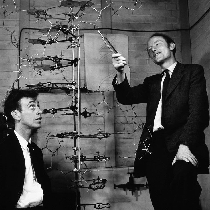 James Watson and Francis Crick with their double helix DNA model (1953) http://ift.tt/2xrxH5F