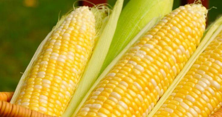 Razones para no volver a comer nunca más maíz