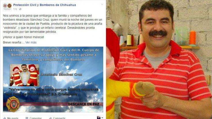 Muere bombero por picadura de araña violinista en Puebla | El Puntero