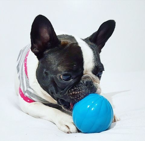 You know what time it is? #BabbleBall time! 😁  👉🏻 https://petqwerks.com/product/babble-balls/ 🐾 💜