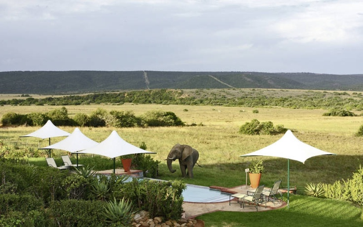 Shamwari Game Reserve, Eastern Cape - A hotel featured by Kuoni Travel for Eastern Cape Game Reserves holidays